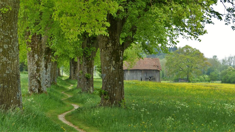 krajobraz-drzewa-lipowe
